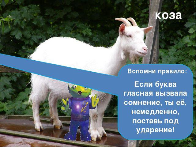 С бородой, а не старик, С рогами, а не бык, Доят, а не корова, С пухом, а не...