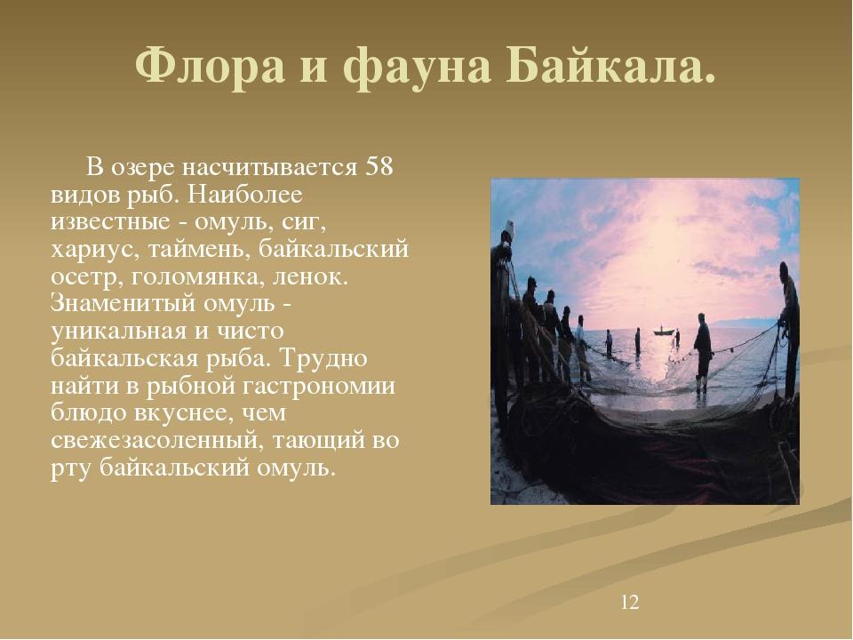 Флора и фауна Байкала. В озере насчитывается 58 видов рыб. Наиболее известны...