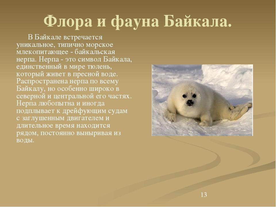 Флора и фауна Байкала. В Байкале встречается уникальное, типично морское мле...