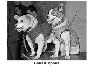 Белка и Стрелка Не все животные вернулись из опасных космических путешествий.