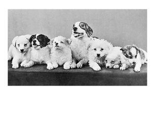 У собаки Стрелки даже родились щенята.