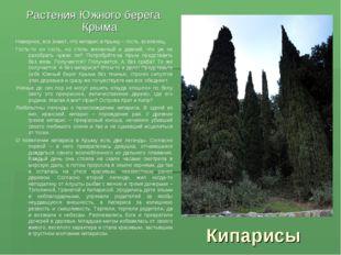 Кипарисы Растения Южного берега Крыма Наверное, все знают, что кипарис в Крым