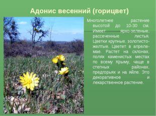 Адонис весенний (горицвет) Многолетнее растение высотой до 10-30 см. Имеет яр