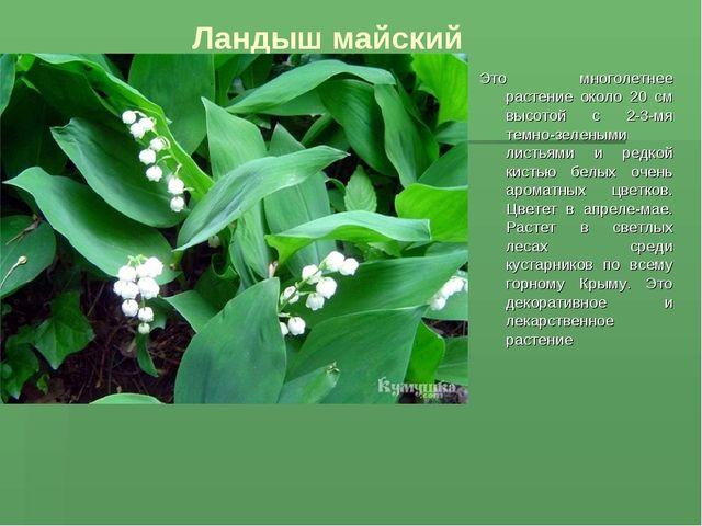 Ландыш майский Это многолетнее растение около 20 см высотой с 2-3-мя темно-зе...