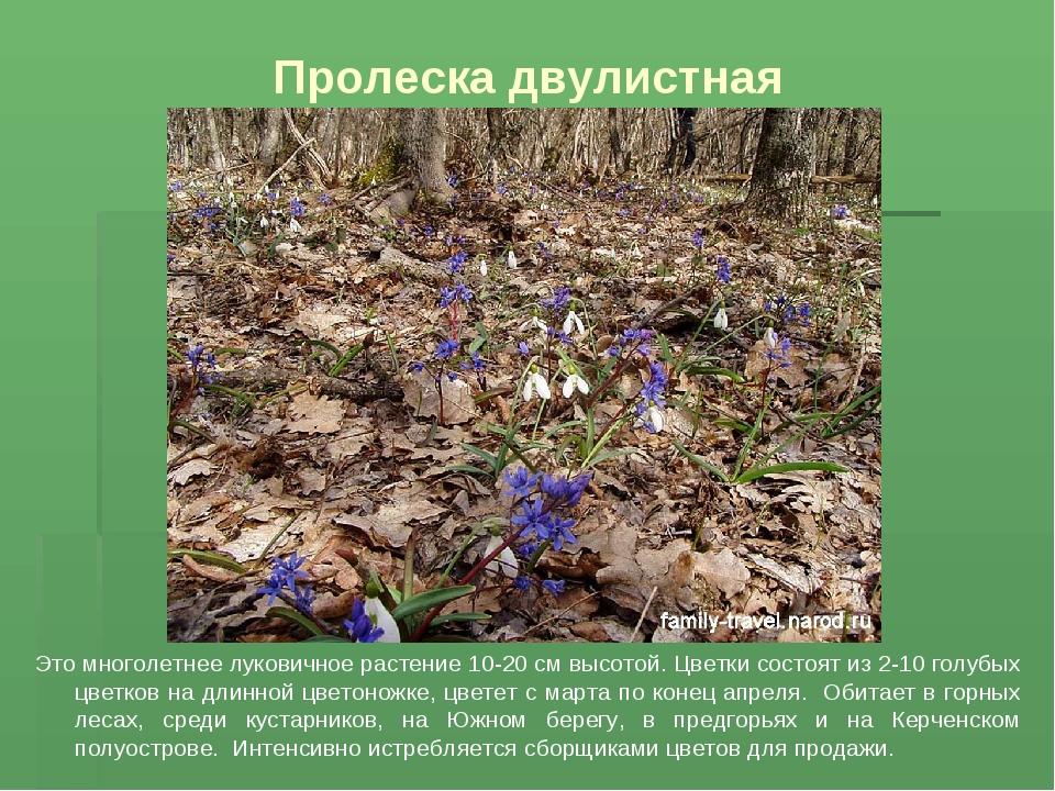 Пролеска двулистная Это многолетнее луковичное растение 10-20 см высотой. Цве...