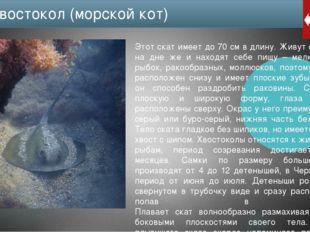 Использованные источники информации ru.wikipedia.org fb.ru/article/164163/che