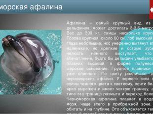 Численность особей черноморской афалины очень небольшая: около 7 тысяч и пост