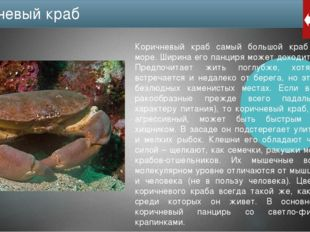 Каменные крабы не только обитают в Черном море, но и в Средиземном, на Атлант