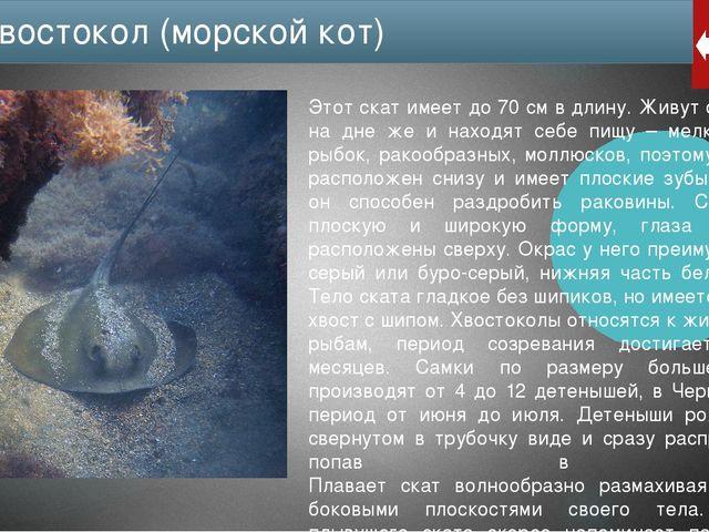 Использованные источники информации ru.wikipedia.org fb.ru/article/164163/che...