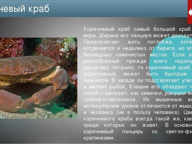 Каменные крабы не только обитают в Черном море, но и в Средиземном, на Атлант...