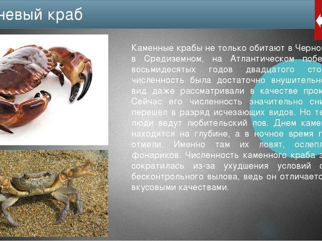 Морской дракончик (Trachinus). Это небольшая (весом до 800 г, длиной до полум...