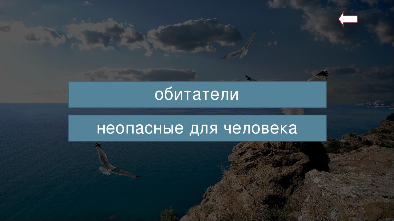 Черноморская скорпена (от лат. Scorpaena porcus) – хищная рыба, обитающая в С...