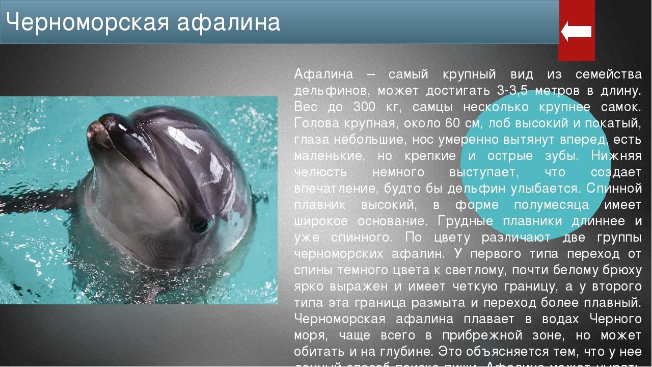 Численность особей черноморской афалины очень небольшая: около 7 тысяч и пост...