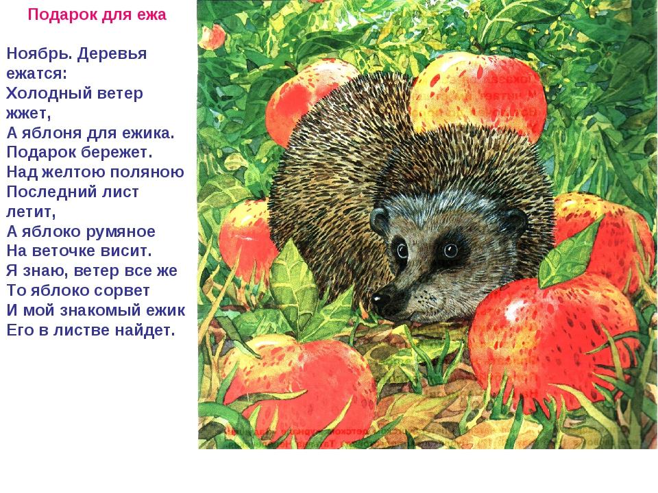 Подарок для ежа Ноябрь. Деревья ежатся: Холодный ветер жжет, А яблоня для ежи...