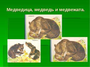 Медведица, медведь и медвежата.