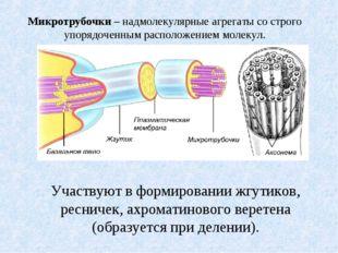 Микротрубочки – надмолекулярные агрегаты со строго упорядоченным расположение