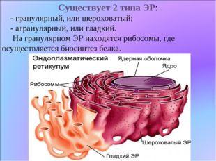 Существует 2 типа ЭР: - гранулярный, или шероховатый; - агранулярный, или гла