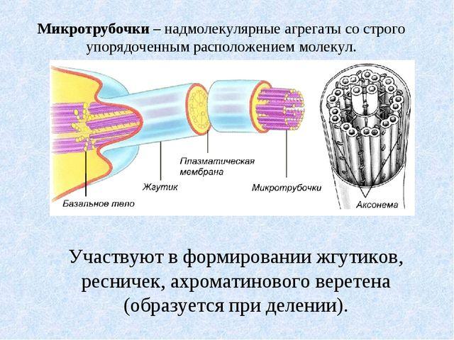 Микротрубочки – надмолекулярные агрегаты со строго упорядоченным расположение...
