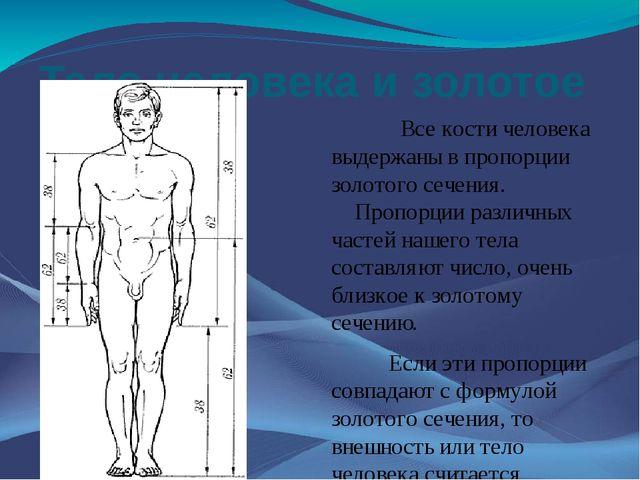 Тело человека и золотое сечение Все кости человека выдержаны в пропорции золо...