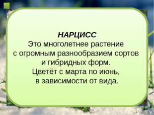 Интернет источники Фон - http://www.mrwallpaper.com/wallpapers/Grass-Snow-16