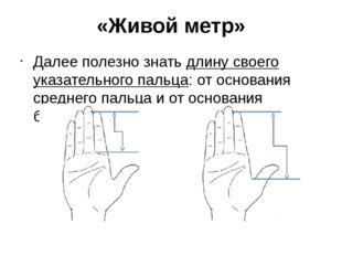 «Живой метр» Далее полезно знатьдлину своего указательного пальца: от основа
