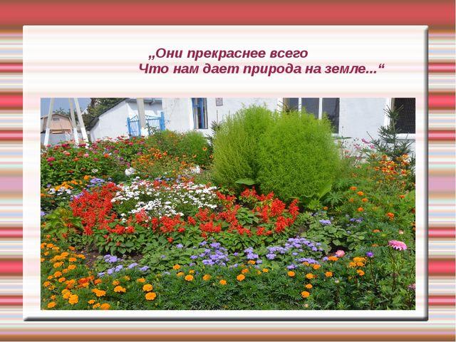 """""""Они прекраснее всего Что нам дает природа на земле..."""""""