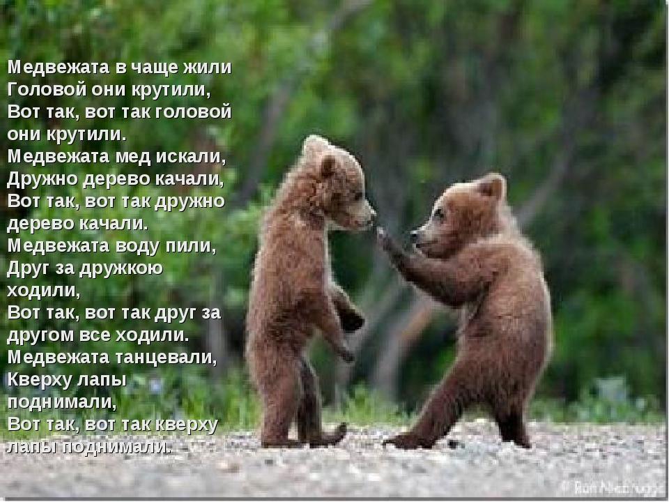 Медвежата в чаще жили Головой они крутили, Вот так, вот так головой они крути...