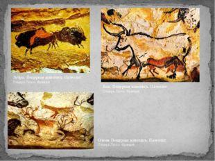 Зубры. Пещерная живопись. Палеолит. Пещера Ласко. Франция. Олени. Пещерная жи