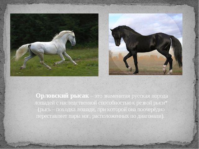 Орловский рысак – это знаменитая русская порода лошадей с наследственной спо...