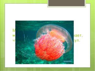 Медузы появились более 650 миллионов лет назад. Это означает, что они старше