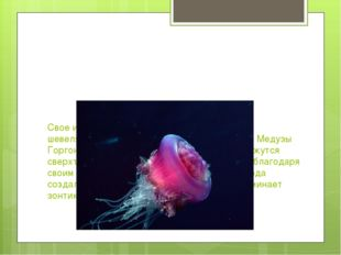 Свое имя медуза получила из-за сходства с шевелящимися волосами-змеями легенд
