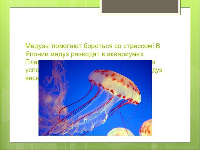 Медузы помогают бороться со стрессом! В Японии медуз разводят в аквариумах. П...