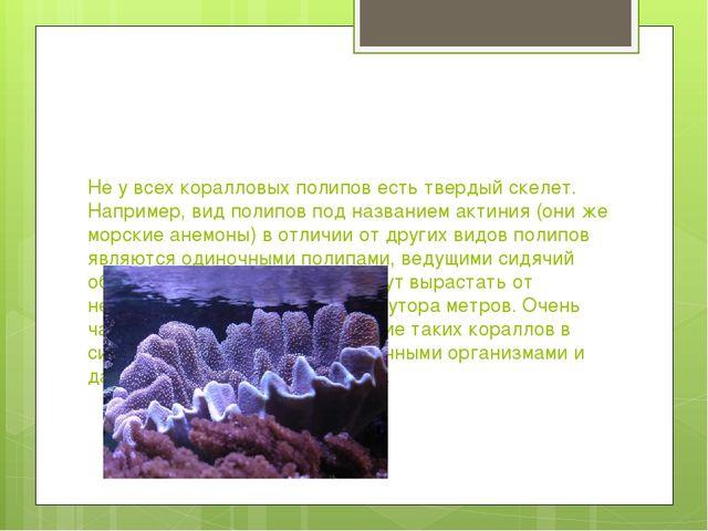 Не у всех коралловых полипов есть твердый скелет. Например, вид полипов под н...