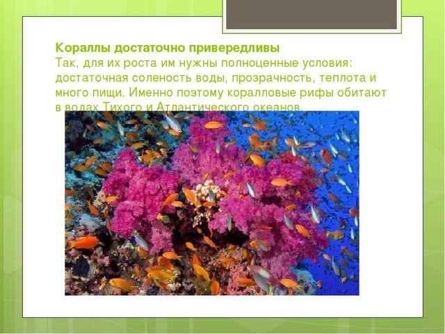 Кораллы достаточно привередливы Так, для их роста им нужны полноценные услови...