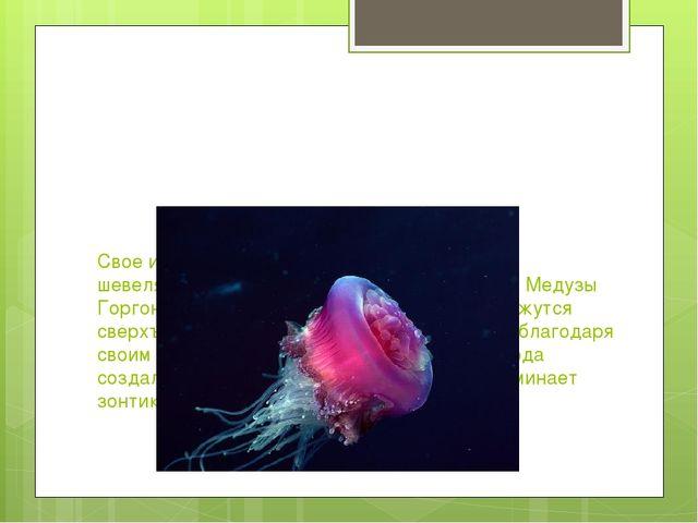 Свое имя медуза получила из-за сходства с шевелящимися волосами-змеями легенд...