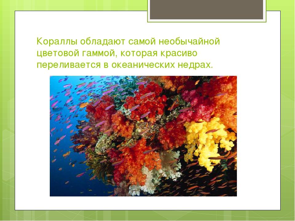 Кораллы обладают самой необычайной цветовой гаммой, которая красиво переливае...