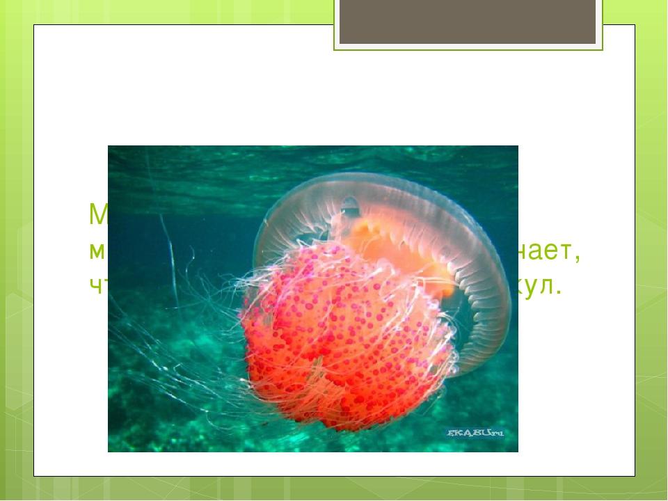 Медузы появились более 650 миллионов лет назад. Это означает, что они старше...