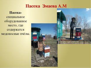 Пасека Змаева А.М Пасека-специальное оборудованное место, где содержатся мед