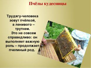 Пчёлы кудесницы Трудягу-человека зовут пчёлкой, а ленивого – трутнем. Это не