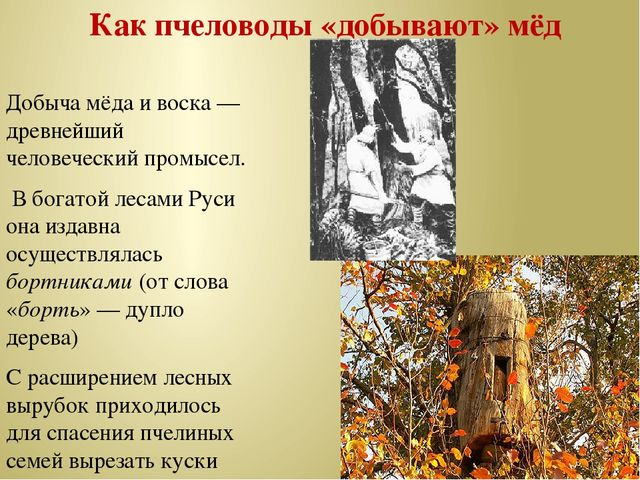 Как пчеловоды «добывают» мёд Добыча мёда и воска — древнейший человеческий пр...