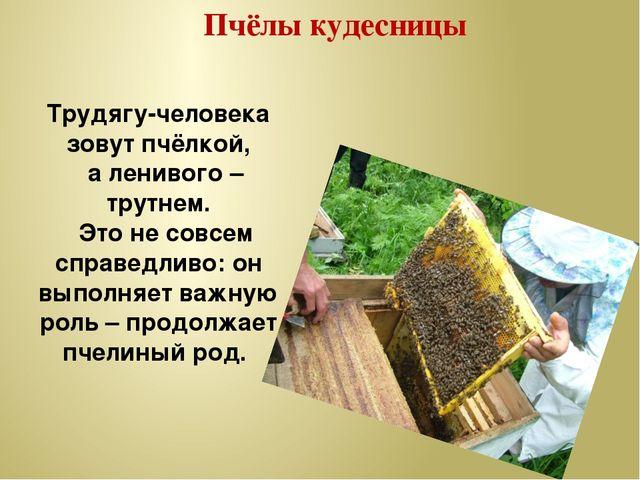 Пчёлы кудесницы Трудягу-человека зовут пчёлкой, а ленивого – трутнем. Это не...
