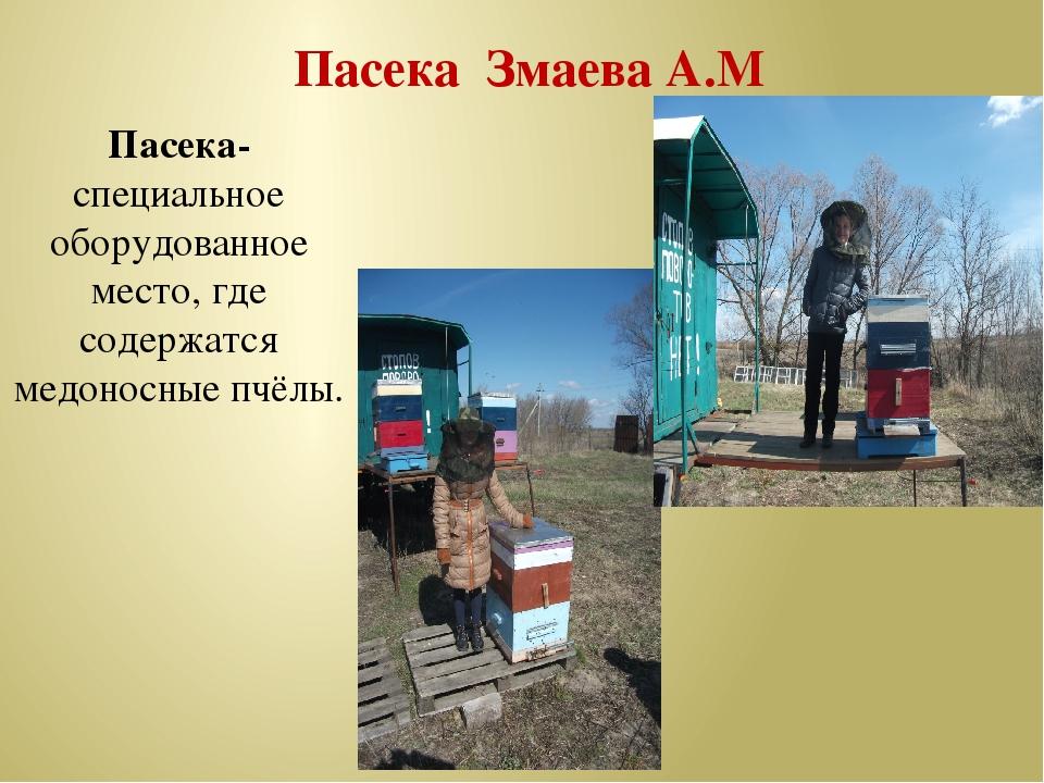 Пасека Змаева А.М Пасека-специальное оборудованное место, где содержатся мед...