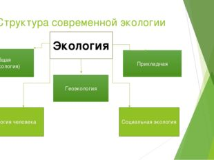 Структура современной экологии Экология Общая (биоэкология) Геоэкология Прикл