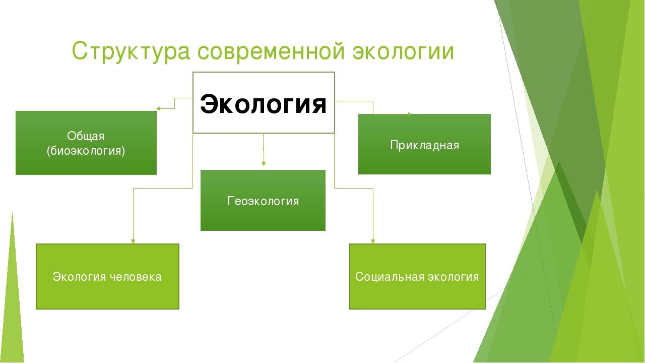 Структура современной экологии Экология Общая (биоэкология) Геоэкология Прикл...