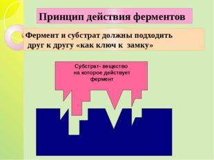 Субстрат- вещество на которое действует фермент Фермент и субстрат должны по