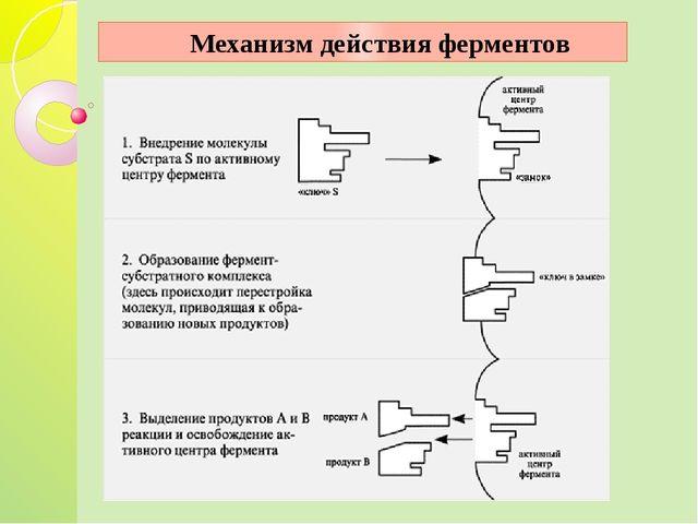 Механизм действия ферментов