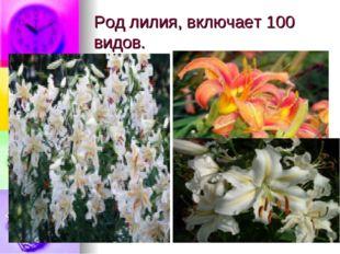 Род лилия, включает 100 видов.