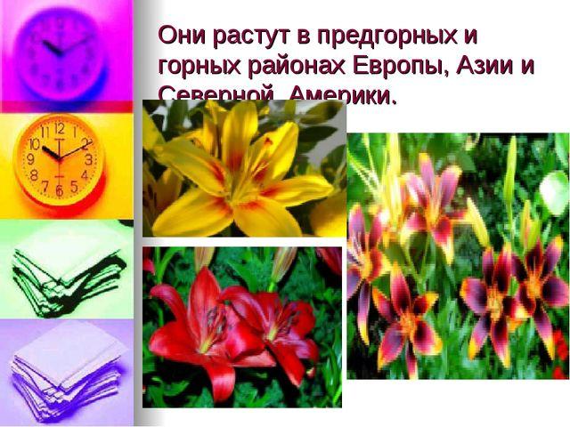 Они растут в предгорных и горных районах Европы, Азии и Северной Америки.