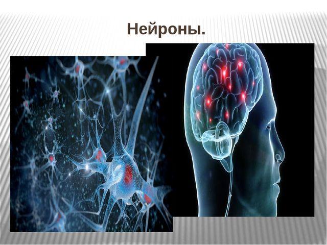 Нейроны.