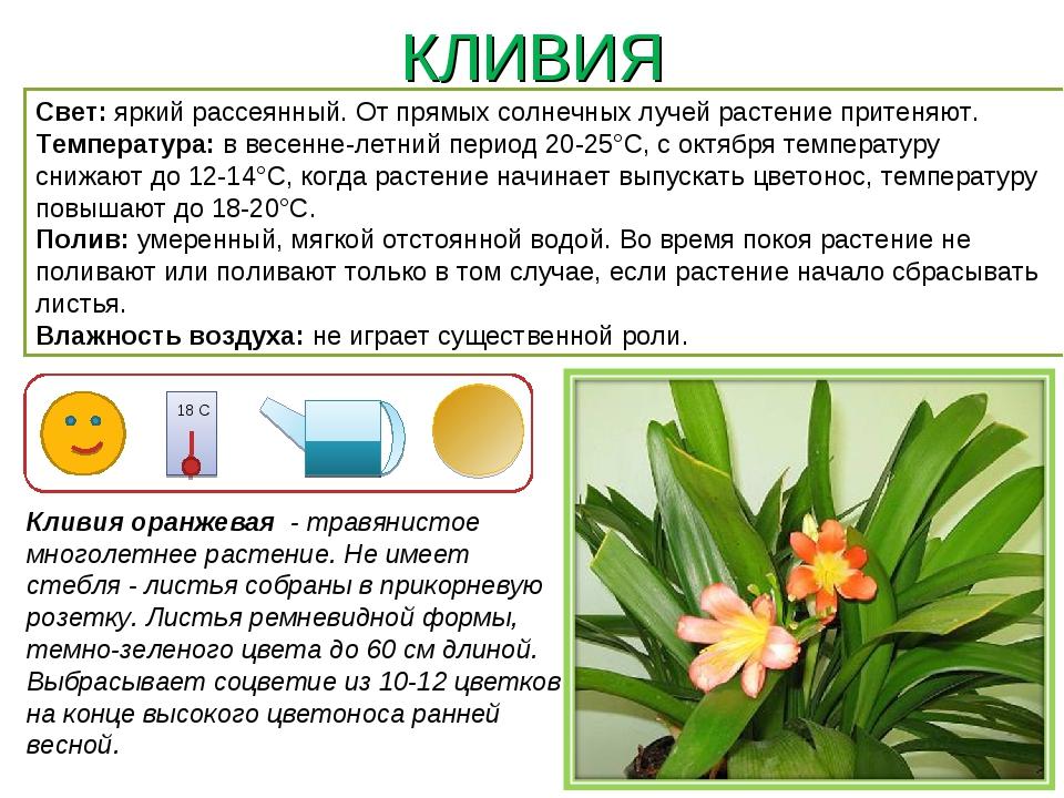 благодатный картотека комнатных растений в картинках эти